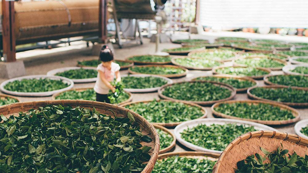 kids farming work laws