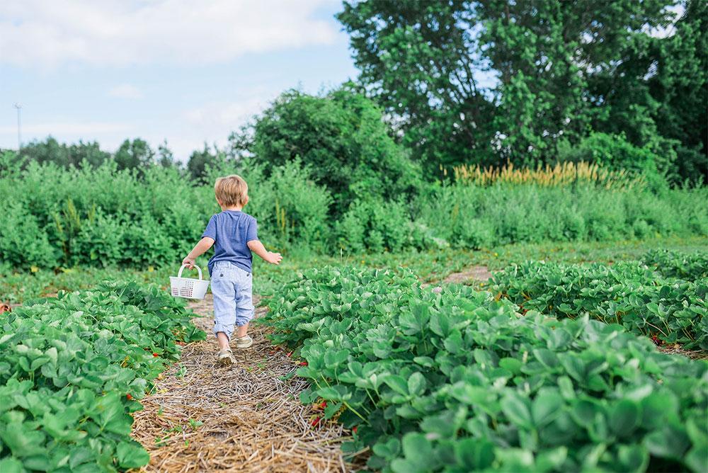Passive Income Build Wealth Gardening