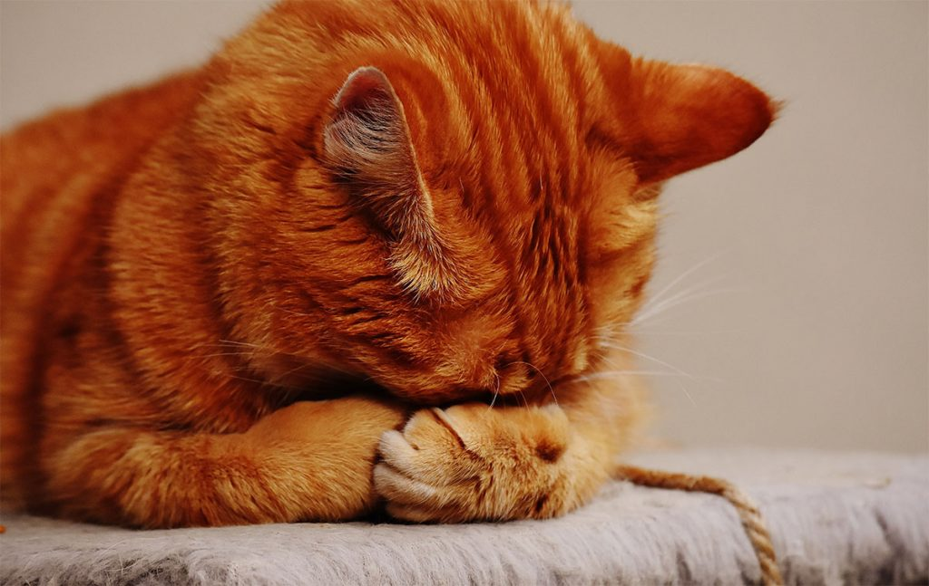 cats tearing up stuff